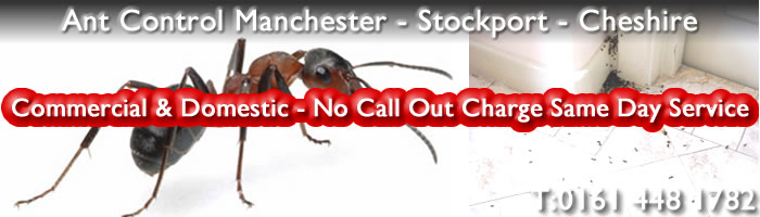 Ants Pest Control Manchester