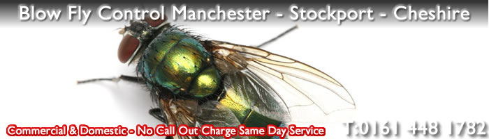 Blow Fly Pest Control Manchester