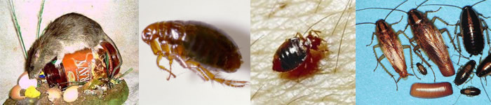 Common Pests in Cheshire