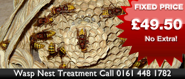Wasp Nest Treament in Blackley