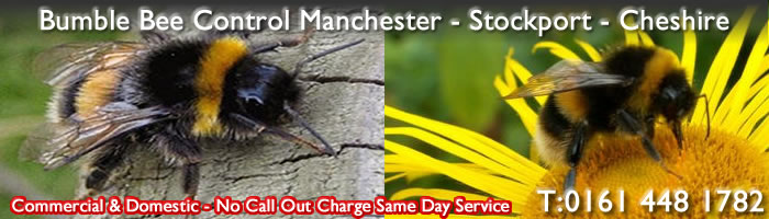 Bumble Bee Pest Control Manchester