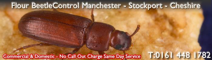 Pest Control Manchester