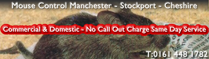 Pest Control Manchester